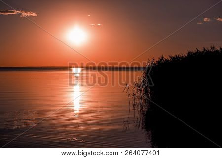 Horizontal Shot Of The Peaceful Sunset At The Lake. The Dark Shape Of The Reed. The Reflection Of Th
