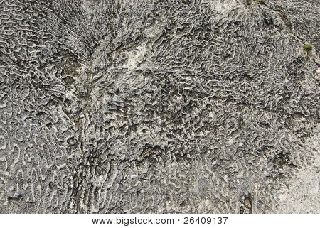 Sea coral background fossil ocean texture -- series 06
