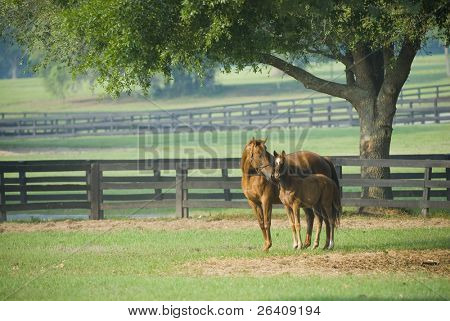 Baby horse and mare equine -- series 06