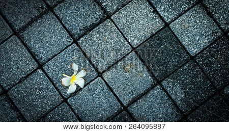 Flower withered on empty black and grey concrete road. Died and death background. Top View of withered Plumeria flower on rough floor. End of life. Farewell forever life. Lonely elderly people concept poster