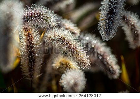 Morning Macro Dew Water Drops Close Up Nature Autumn Cold Grass