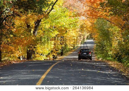 Black car on rural road surround by yellow trees during a nice and sunny autumn day