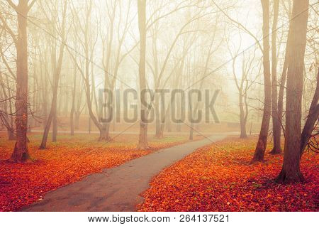 Autumn landscape scene - foggy autumn park alley with bare autumn trees and dry fallen colorful autumn leaves, autumn landscape with deserted autumn park alley