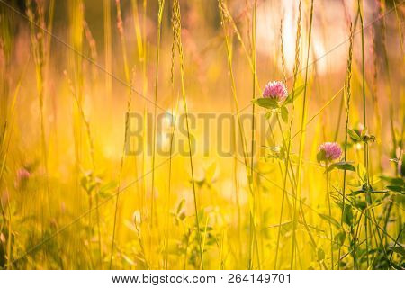 Nature Background Concept. Beautiful Summer Nature Meadow Background. Flowering Green Meadow On Spri