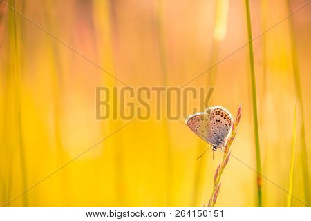 Nature Background Concept And Beautiful Summer Meadow Background. Inspirational Nature Closeup. Tran