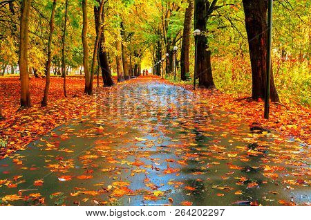 Autumn colorful landscape. Autumn trees with yellow foliage and autumn leaves on the wet asphalt road in park autumn alley after rain. Autumn landscape scene