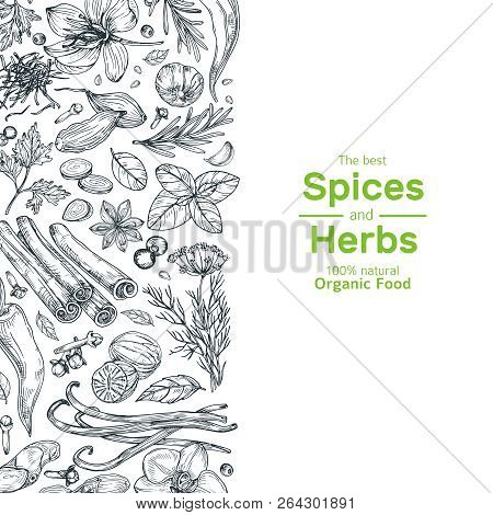 Hand Drawn Herbs And Spices Background. Vintage Organic Indian Kitchen And Asian Spices Vector Cooki