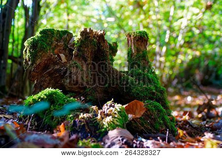 Moss On Tree Roots, Branch And Log In A Green Forest Or Moss On Tree Trunk. Tree Bark With Green Mos