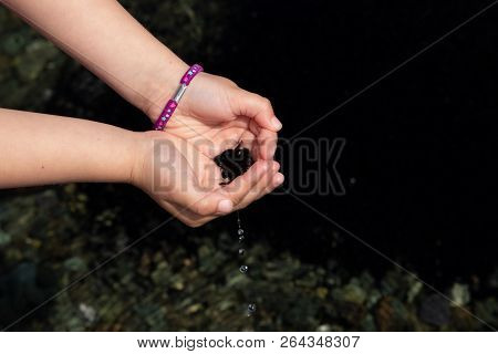 Hand Of Child With Many Black Tadpoles Caught In The Pond