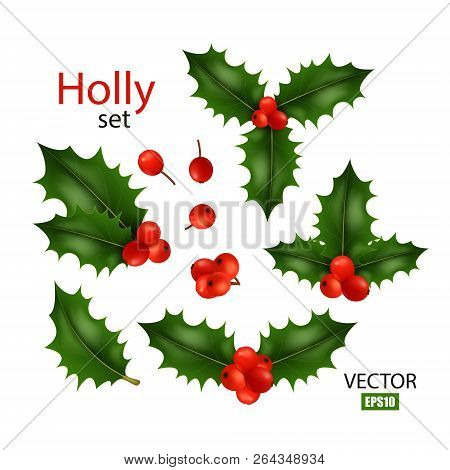Realistic Image Set Of Holly, Different Variations, Christmas Symbol, Christmas Decor, Winter Berry.