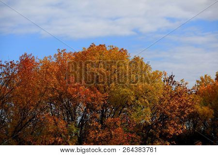 Golden Autumn In Central Russia. Autumn Trees Lit By Sunshine - Sunny Autumn Landscape In Bright Sun