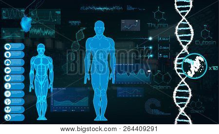 Concept Of Sports Science, Futuristic Interface Of Heart Analysis; Digital Blueprint Of Human. Analy