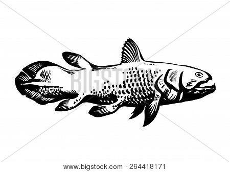 Dinichthys, Prehistoric Fish. Lobe-finned Fish, Sarcopterygii, Coelacanth. Hand Drawn Vintage Engrav