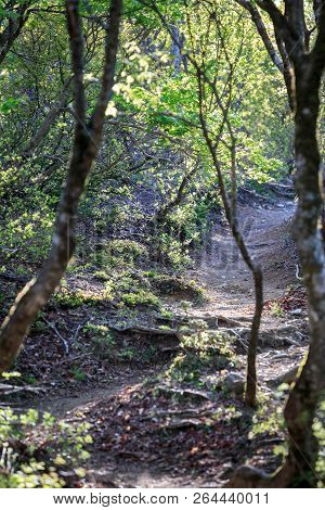 Narrow Dirt Path Curves Uphill Through Woods