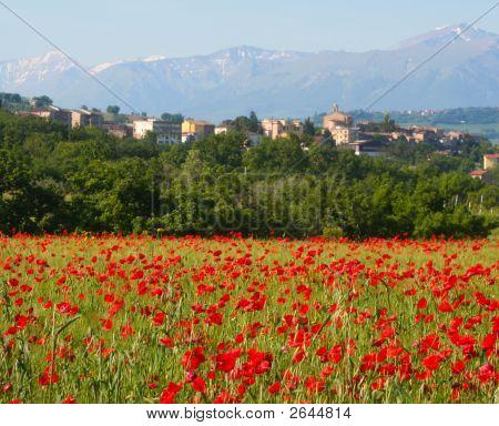 Poppy Village, Central Italy