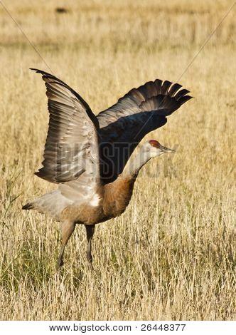 Crane At Take-off