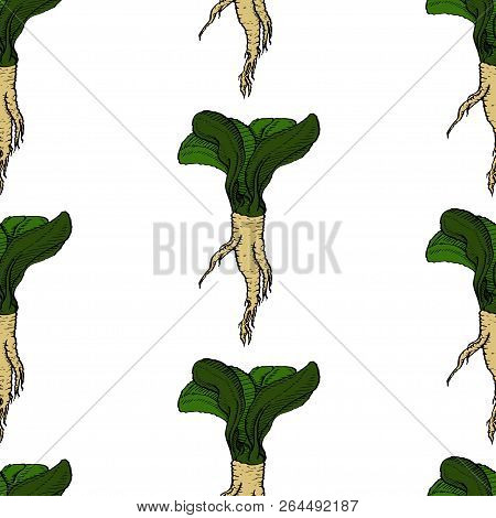 Horseradish Vector Natural Coloured Pattern For Web, Textile, Branding, T-shirts, Cards, Craft