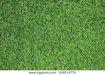 Green Grass Texture Background, Natural Field With Green Grass Growing On Outdoor Lawn. Vibrant Summ