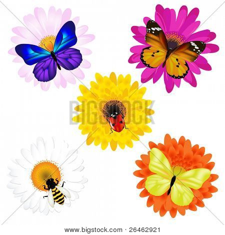 Butterflies, Ladybird And Bee, Sitting On Daisies, Isolated On White poster
