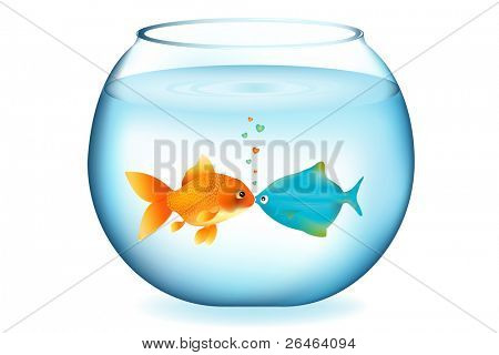 Two Fishes Kissing In Aquarium, Isolated On White