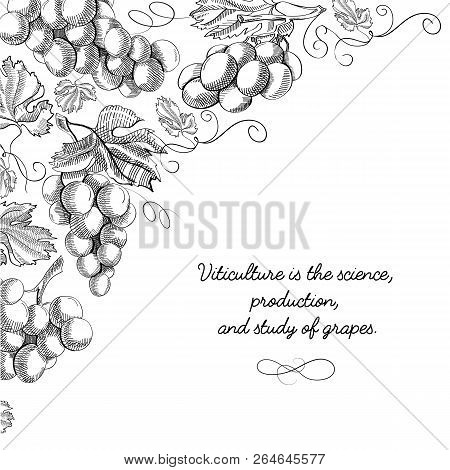 Typography Design Card Doodle With Inscription That Viticulture Is Science, Production And Study Of