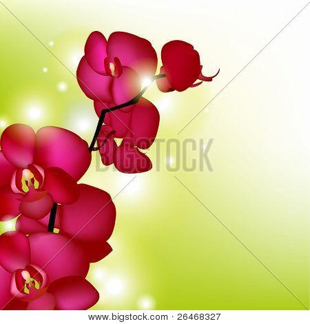 Rosa Orchideen mit Blur, Vektor-illustration