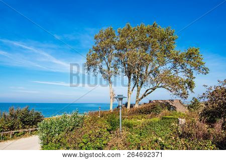 Tree On Shore Of The Baltic Sea In Ahrenshoop, Germany.