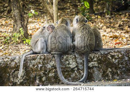 Sleeping Monkeys At The Uluwatu Temple In Bali, Indonesia