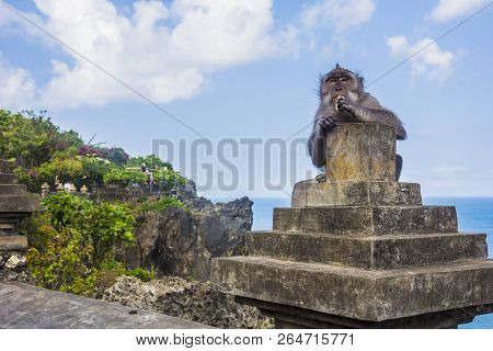 Monkey Eating At The Uluwatu Temple In Bali, Indonesia
