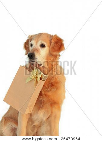 """My dog -"""" Golden retriever """" like dog, which bears presents on white background"""