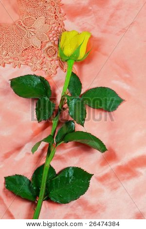 Yellow rose on red background