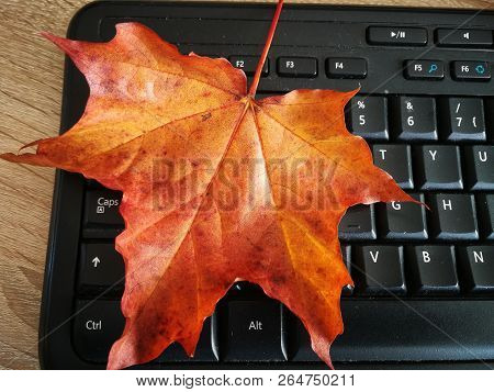 Red Yellow Maple Autumn Leaves On Keyboard