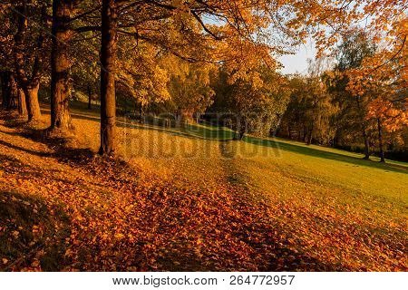 Summer Landscape - Colorful Summer City Park With Deciduous Green Trees In Sunny Weather. Summer Par
