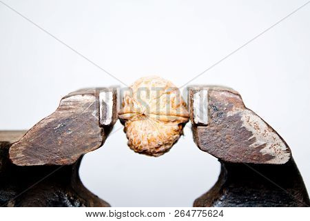 walnut in a vice closeup on white background poster