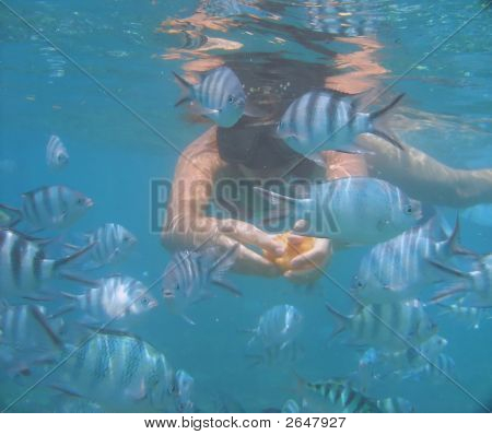 Swimming With Fish In The Ocean