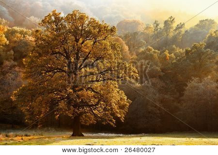 Beautiful tree of colour autumn scenery
