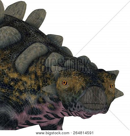 Crichtonsaurus Dinosaur Head 3d Illustration - Crichtonsaurus Was An Ankylosaur Armored Dinosaur Tha