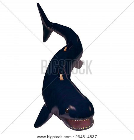 Devonian Cladoselache Shark On White 3d Illustration - The Cladoselache Was A Carnivorous Early Shar
