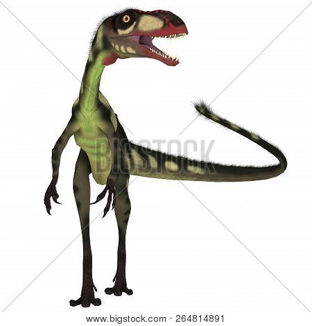 Dilong Dinosaur Front 3d Illustration - Dilong Was A Carnivorous Small Theropod Dinosaur That Lived