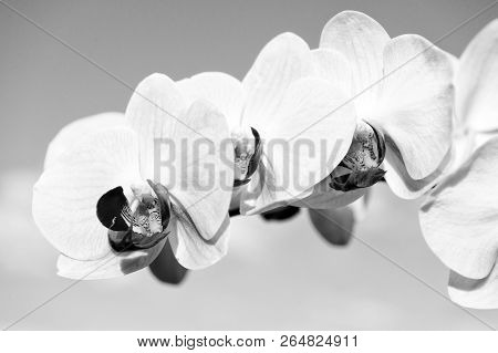 Fragrance And Freshness Concept. Flower With Fresh Blossom On Blue Sky. Blossoming Orchid With Yello