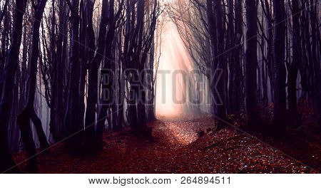 Misty Forest Path Background - Spooky Trees In A Dark Woods  Trail With Sun Beams At Autumn Season -