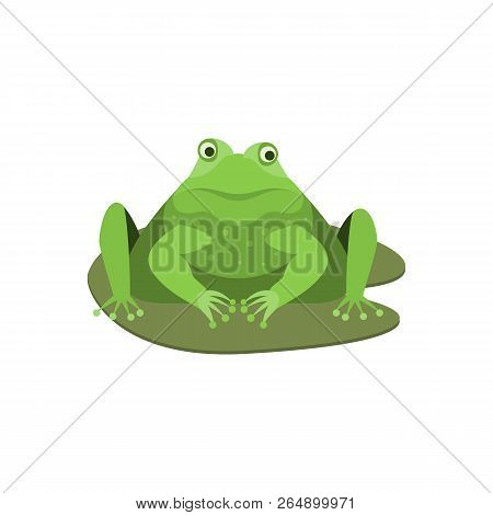 Cartoon Cute Surprised Green Frog Character . Vector