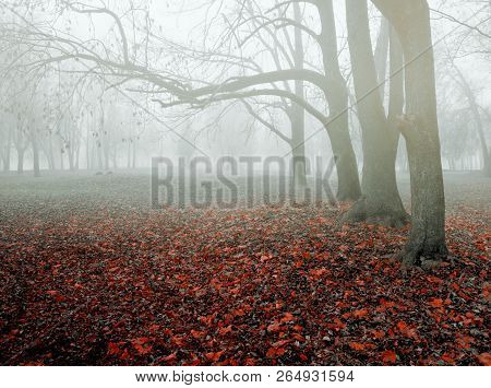 Autumn colorful November foggy landscape - lonely autumn park with bare trees and dry fallen orange autumn leaves, mysterious autumn nature view..Autumn landscape scene - lonely autumn forest in autumn foggy weather. Autumn gothic landscape