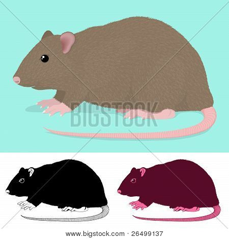 Cartoon Rat Rodent in three colour variations isolated on green and white poster