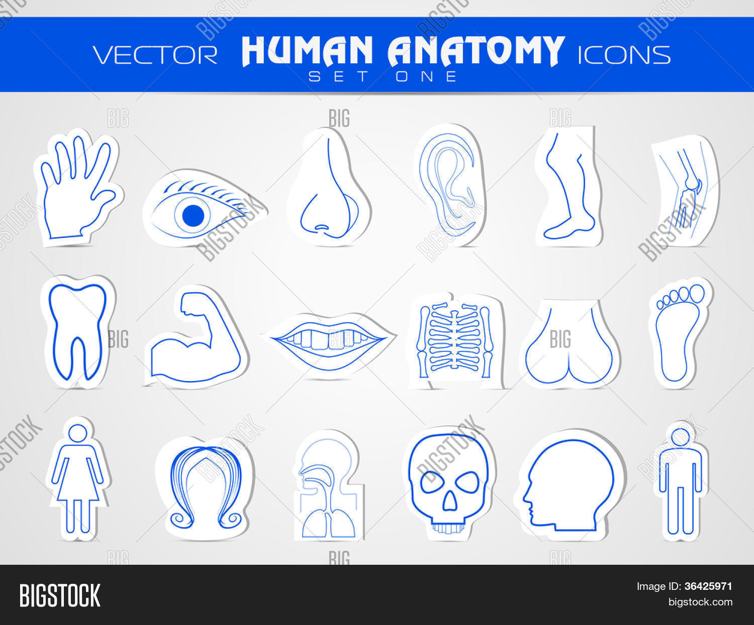 Human Anatomy Website Vector Photo Free Trial Bigstock
