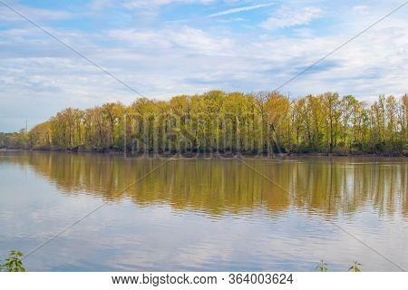 View Of Trees From Across Willamette River In Portland, Oregon