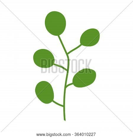 Green Alga Isolated With Large Round Leaves On A White Background. Logo For Spa Salon, Massage, Ocea