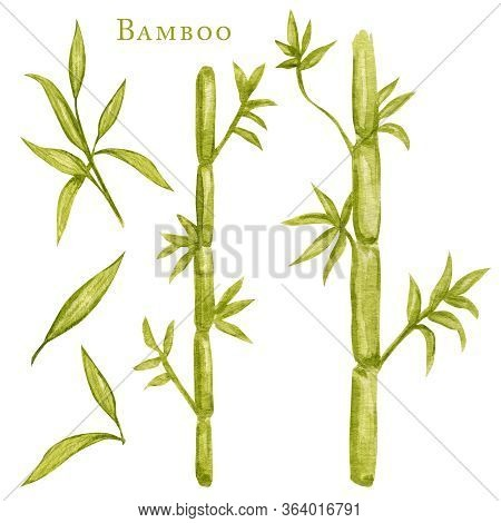 Watercolor Illustration Painting Of Bamboo Leaves , On White Background. Ecological Design. Recycled