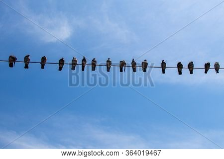 Pigeon Birds Perched On Wire With Blue Sky Background