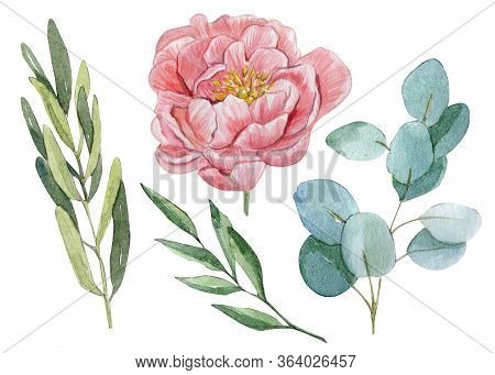 Hand Painted Watercolor Coral Peony, Green Olive And Eucalyptus Leaves Clipart Set Isolated On White